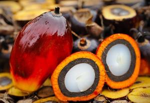palm-oil-4