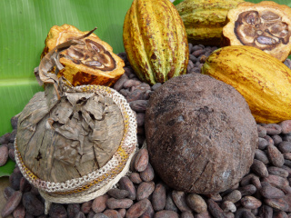 Kakao_Panama