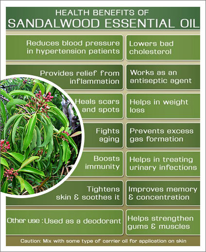 Sandalwood International International Plantations International Sandalwood Plantations Plantations International Sandalwood Plantations Sandalwood Plantations clJFK1