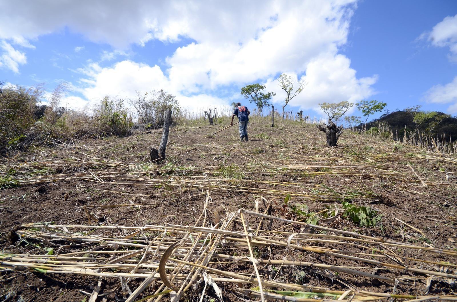 Restoration in Nicaragua (Photo: CIAT)