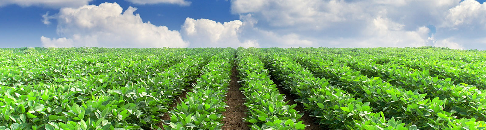 How Does Plantations International Invest In Farm Land