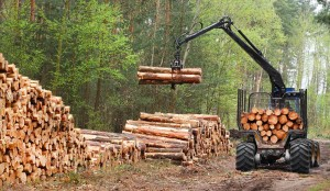 timber-8